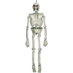 Life Size Hanging Plastic Skeletons 1.5m - 6 PC