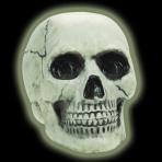 Boneyard Glow In The Dark Skull 20cm - 6 PKG