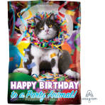 "Avanti Party Animal Junior Shape Foil Balloons 12""/30cm w x 17""/43cm h S30 - 5 PC"