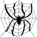 Large Spider in Web 2.4m - 12 PKG/2